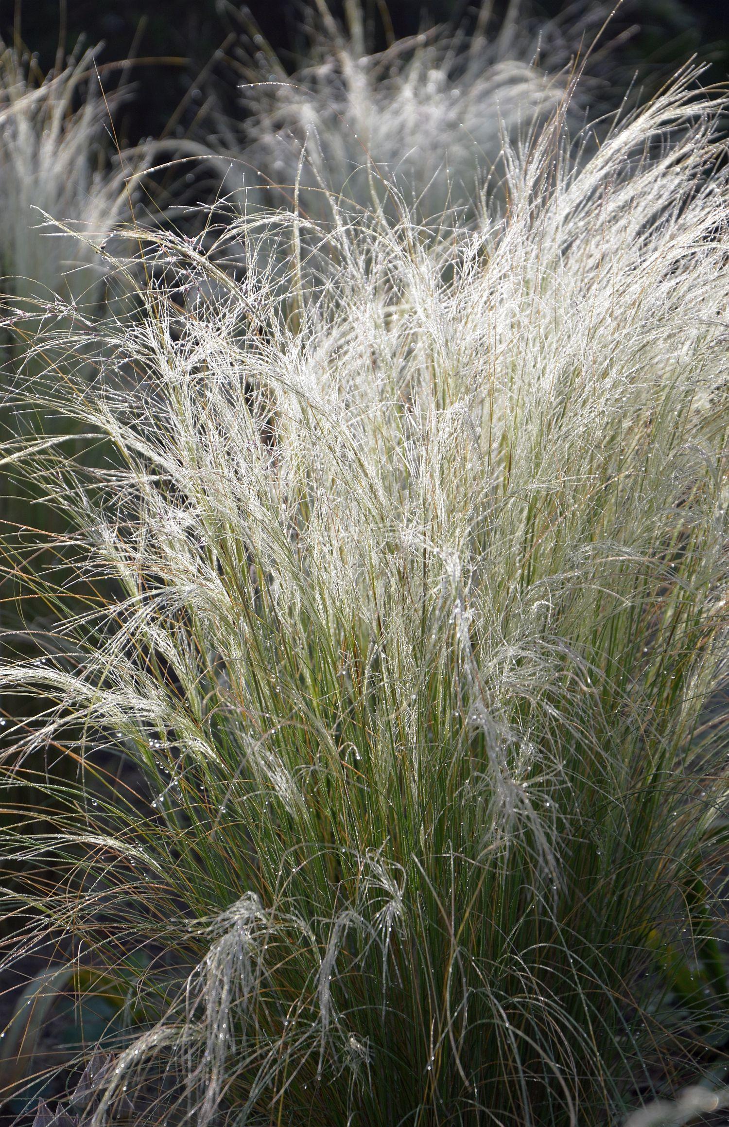 Betere Deze planten zijn dol op droogte | blog | Laurence Machiels TO-89